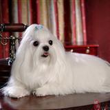 漂亮小狗狗图片