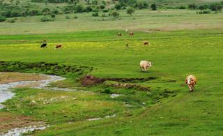 美丽的乌珠穆沁大草原