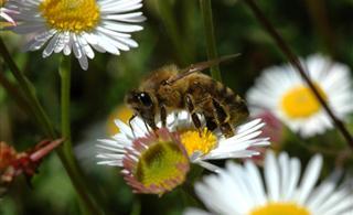 华阳蜂蜜的联想