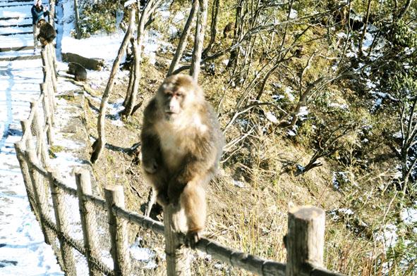 鼠马猴动物风景图片