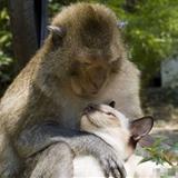 猫和猴子谈恋爱