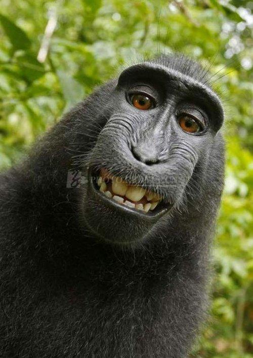 珍稀猕猴捡摄影师相机自拍鬼脸照片