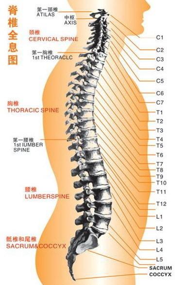 保护脊柱健康每天只用投入几分钟