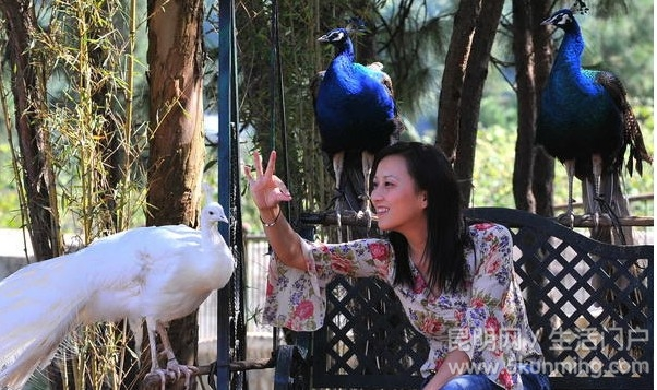 """野生动物园""""动物狂欢节""""7月16日启幕"""