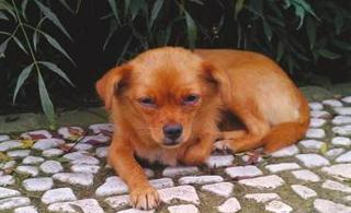 小狗被抛弃两眼流泪苦等1个月