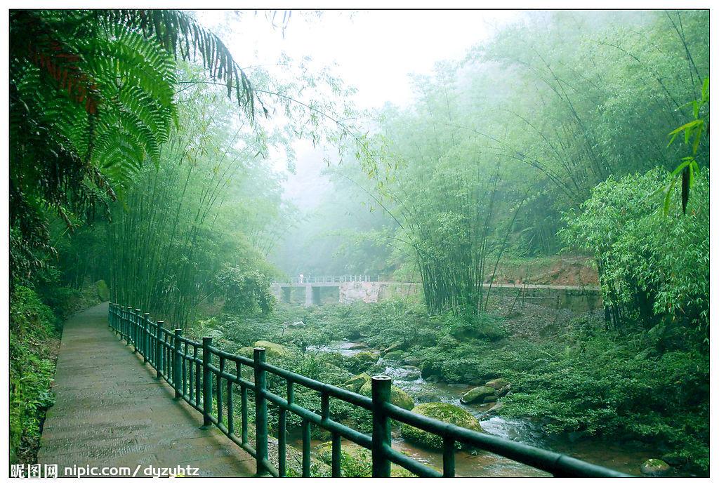 竹林山水图片 大全