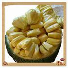 高州长坡特产树菠萝介绍