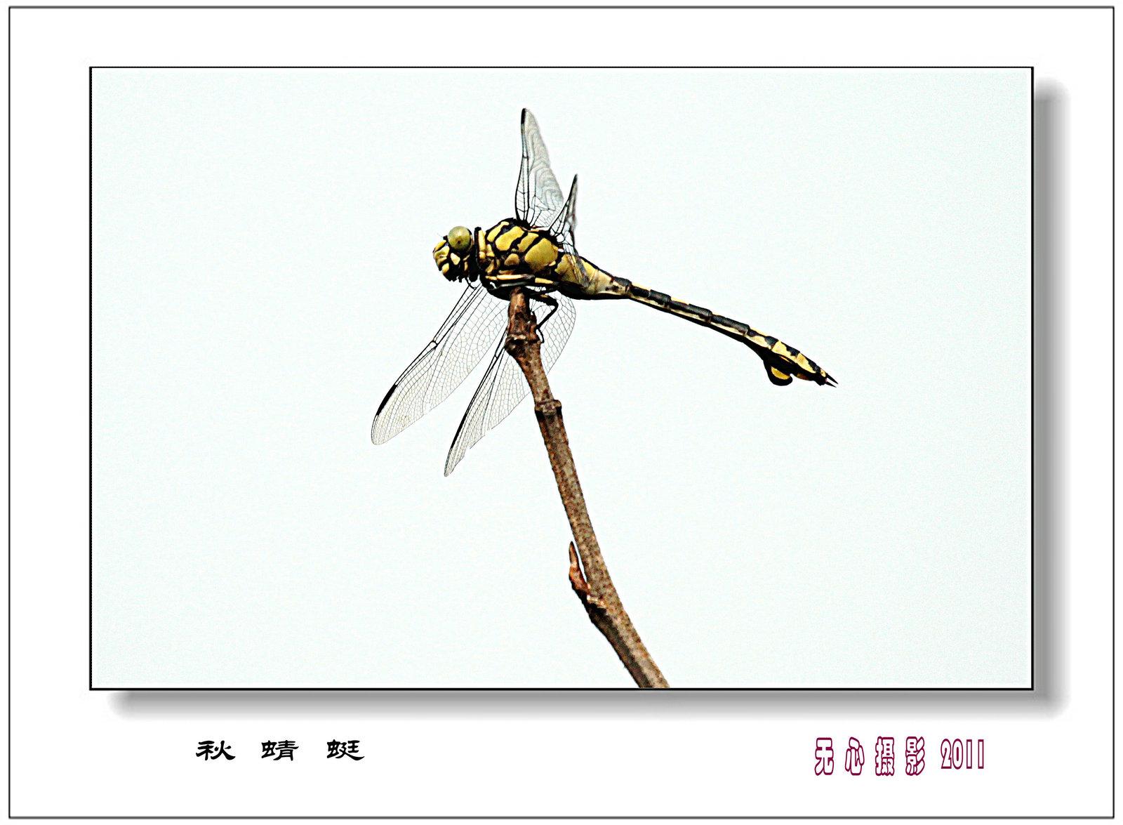 蜻蜓在线视频