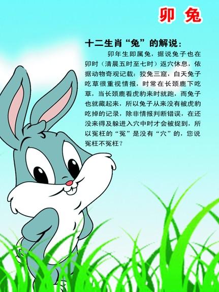 十二生肖属相之卯兔(四)介绍一下可爱的兔子,想必属兔的人也一样哇