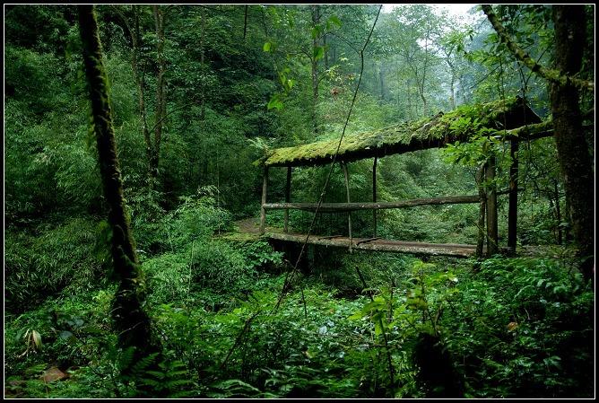 幽默描写树林风景