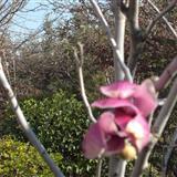 这个季节~春暖花开~