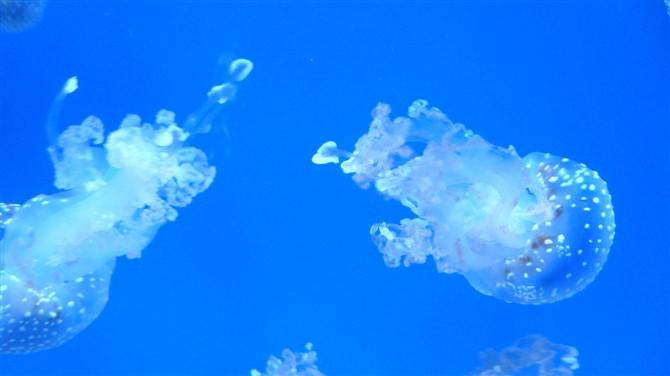 东西湖极地海洋世界摄影