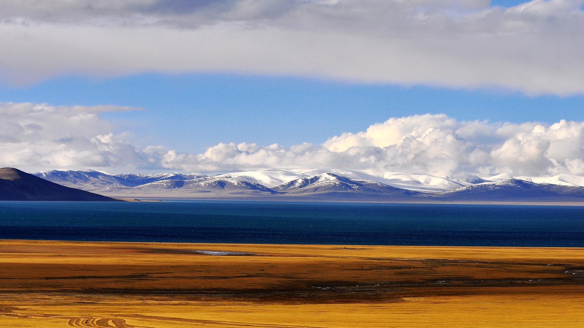 藏区山水牛羊风景图片