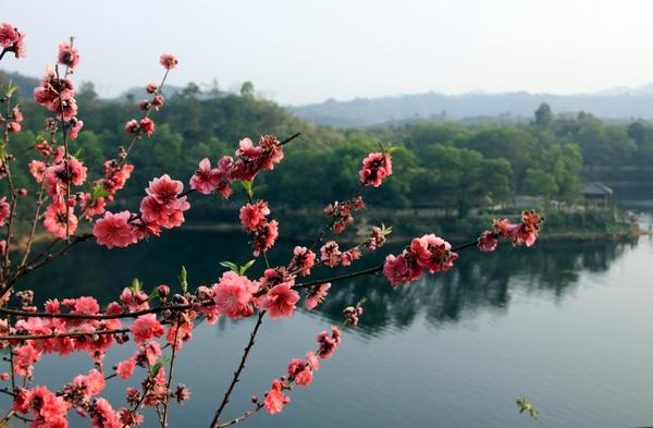 [转贴]实拍惠州红花湖春景(图)