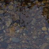 [原创]水坑生态保护区,你们到过多少回?