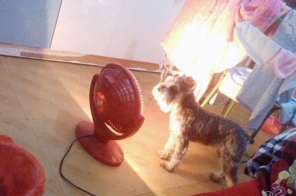 看看我家这个狗,嘿嘿,它还晓得烤火!!!