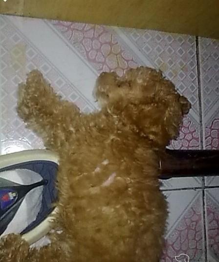 遂宁宠物寻狗启示!!望遂宁城市在线的朋友们帮我注意一下啊!