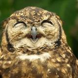 动物们笑翻人的憨笑表情