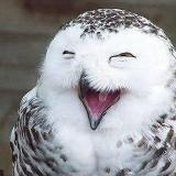 �游��笑翻人的憨笑表情