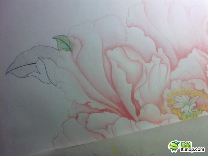 牡丹铅笔手绘
