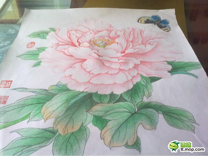 牡丹花铅笔画花