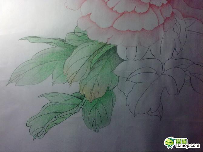 铅笔画牡丹花步骤 解