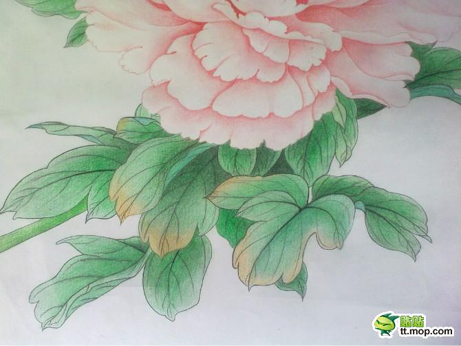 画牡丹步骤铅笔画