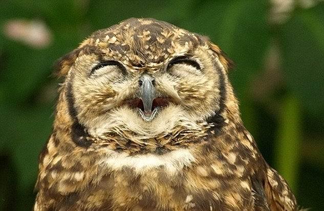 [贴图]动物们笑翻人的憨笑表情