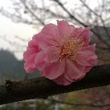 [原��]春暖花�_
