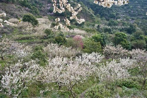 [转贴]惠东县梁化国家森林公园赏花(图)