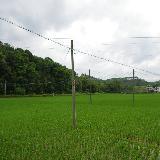 [原创]龙川县丰稔镇左拔村美丽的风景