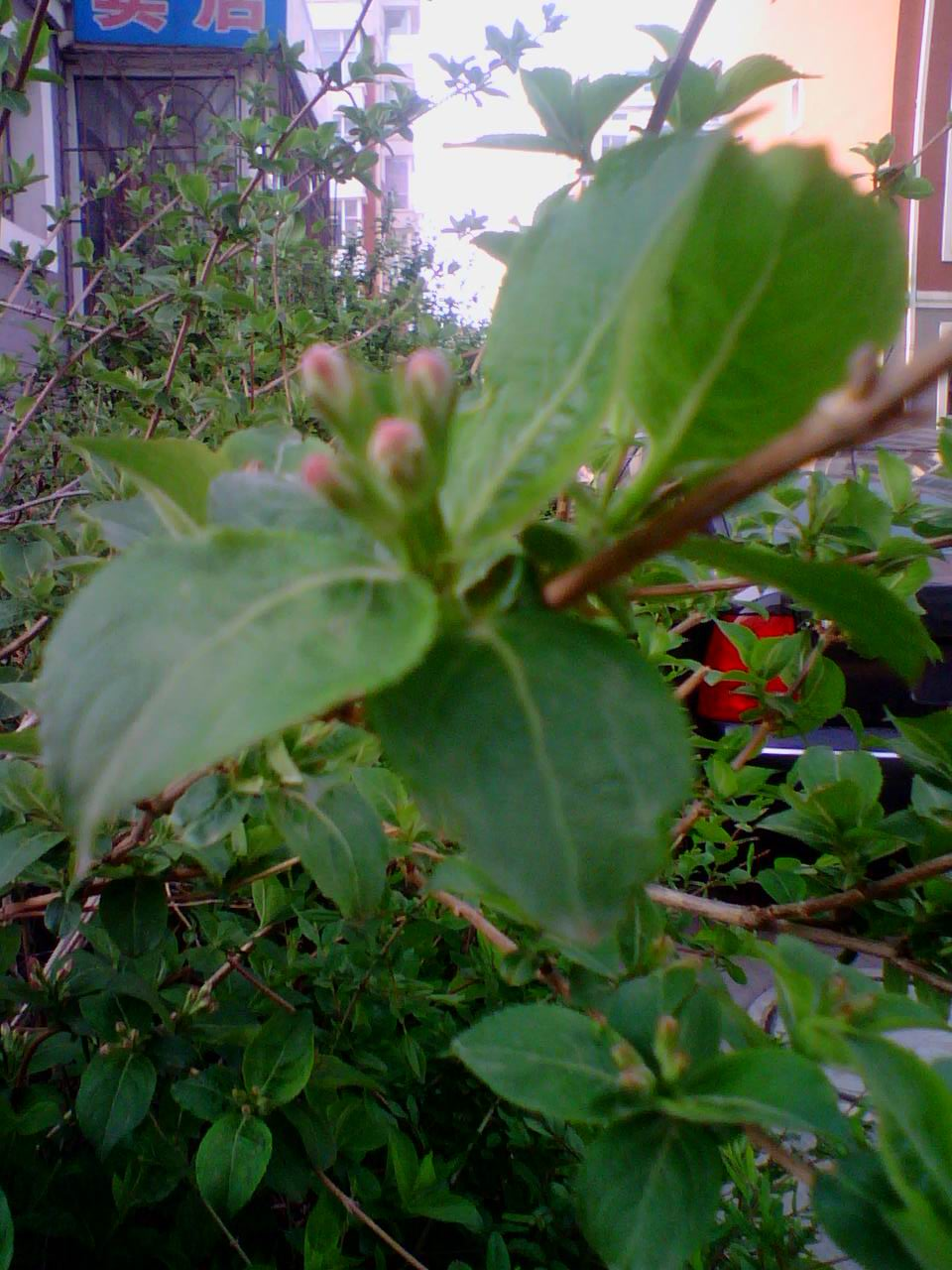 只缘点新绿,小草入镜来:富江苑春绿印象