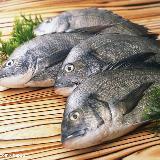 [推荐]如何挑选新鲜鱼?