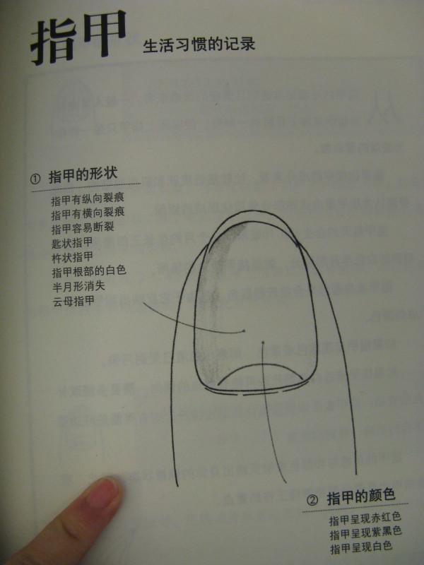 指甲生理结构图