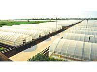 各乡镇现代农业示范园建设要实现5000亩规模