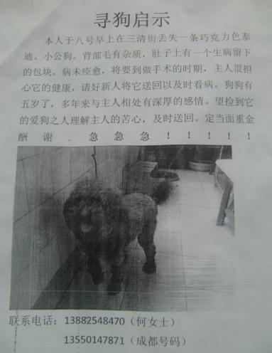 [原创]寻狗启示!本人泰迪狗狗在三清街丢失~~~