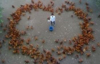 看人家养鸡场老板的阵容,我们简直弱爆了(图)