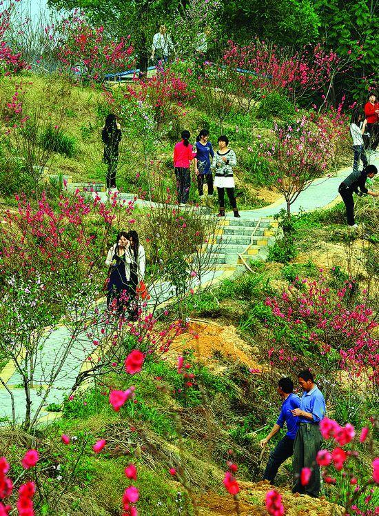 惠州红花湖,桃花正盛开(图)