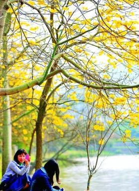 惠州市区4个春日赏花好地方(图)