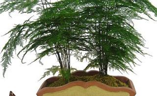 [转贴]十八种常见室内植物的功效