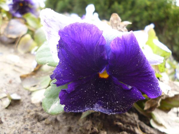 海门东洲公园——花草也很美