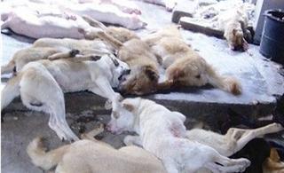 [转贴]犯罪团伙不到20天毒杀600余家犬卖出8000余斤狗肉