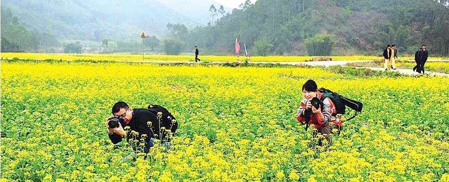博罗横河花园村:古村落+百亩油菜花(图)