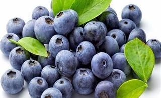 """特殊的水果""""浆果之王""""蓝莓"""