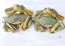 珠海四大美食之斗门重壳蟹