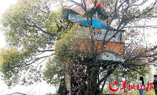 [转贴]树杈建住房 没证临拆迁