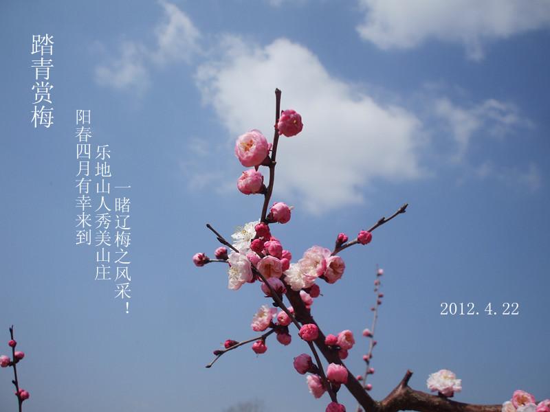 一朵朵绽开的梅花