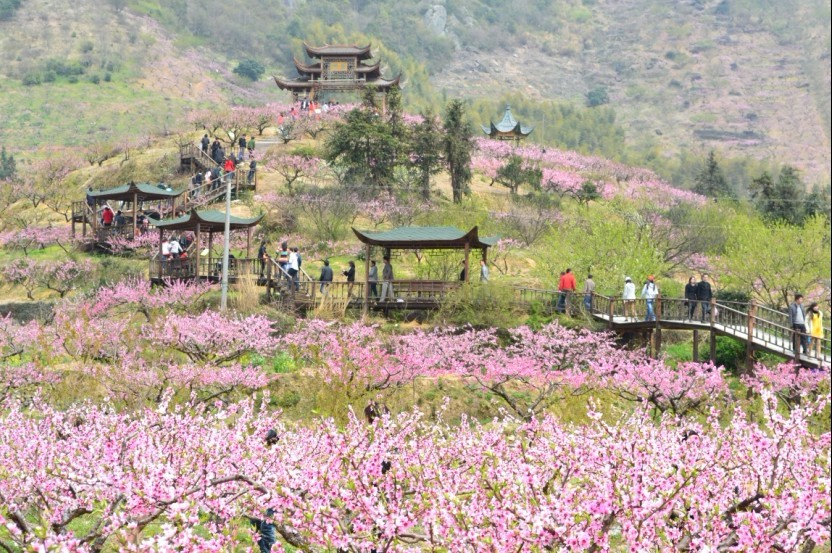 春天美丽桃林景色照片