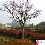 池淮绿富园艺场