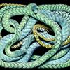 ?#26053;?#32654;艳!蛇